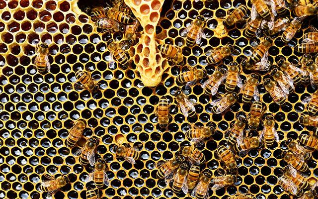 Včelárska paseka a skanzen